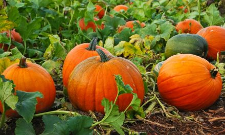 Five Health Benefits of Pumpkin
